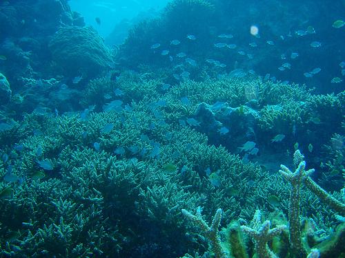 Malediwy rafa koralowa