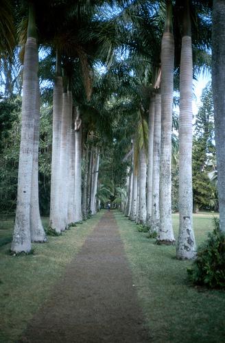 zdjęcia Mauritius