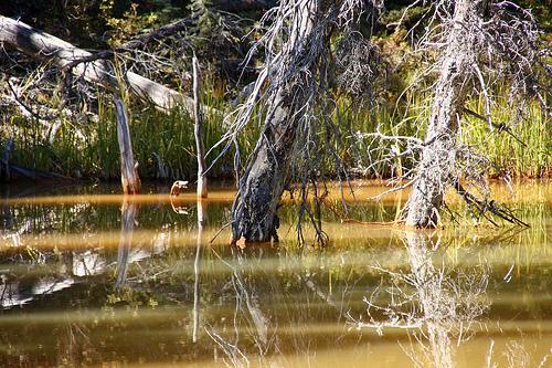 Park Narodowy Kootenay