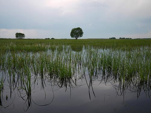 Biebrzański Park Nardowowy - mokradła