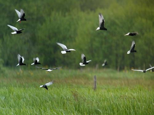 Biebrzański Park Narodowy - ptaki