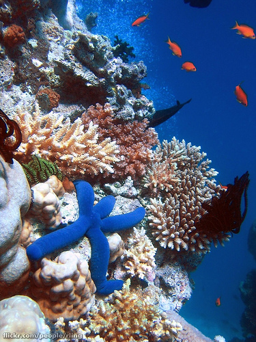 Wielka Rafa Koralowa - Australia